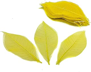 NAVA CHIANGMAI Rubber Tree Leaves - Pack of 100 Skeleton Leaves Decorative DIY Craft, Artificial Leaves Craft Card Scrapbook DIY Handmade Embellishment Decoration Art (Yellow)