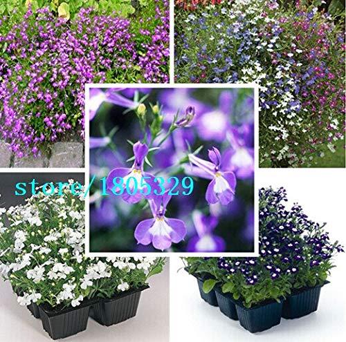 Multicolorido: Lobelia Erinus Sementes 100 Pcs Sementes De Flores Diy New Home Jardim Bonsai Cor Da Mistura De Flores Bonitas Frete Gr & Aacute; Tis