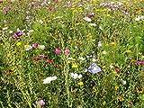 Mezcla de flores y abejas para abejas silvestres y langostas, 1000 semillas (Bienenweide)