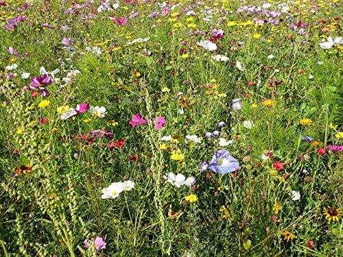 Bienenweide Blumen Mischung für Wild-Bienen & Hummeln 1000+ Samen