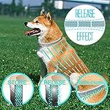 Zoom IMG-2 fretod collare antipulci per cani