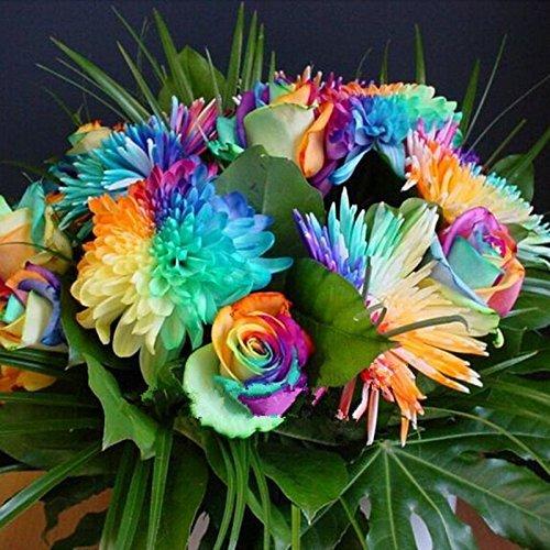 50 semillas de flor del crisantemo del arco iris de colores raros nueva llegada de flores de plantas del jardín de DIY: Amazon.es: Jardín