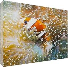 Great Barrier Reef Anemonefish in Sea Anemone Acrylic Block Photo Print Carl Chapman 1149 (20x15x3cm (8x6x1.2in))