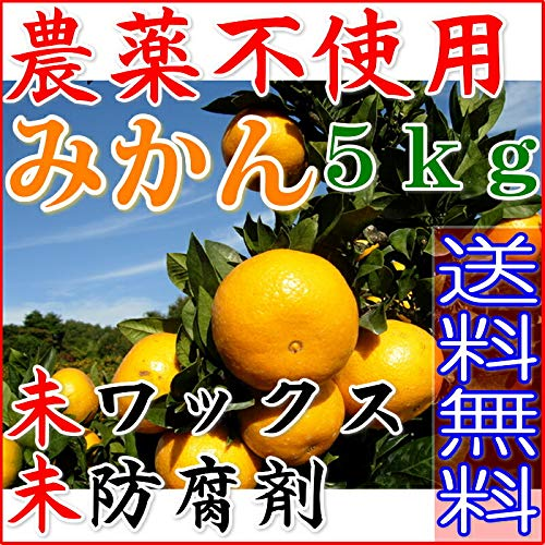 【訳あり】無農薬 愛媛みかん 約5kg サイズ混合 産地直送 ore