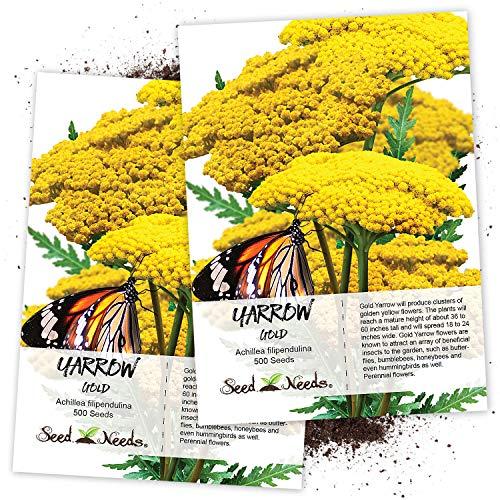 Seed Needs, Gold Yarrow (Achillea filipendulina) Twin Pack of 500 Seeds Each