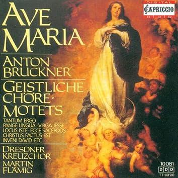 Bruckner, A.: Motets