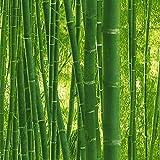 Papier peint bambou | Papier peint motif vert 93871-8 | Papier peint pas cher plante | Papier peint Lutèce pour chambre adulte & salon