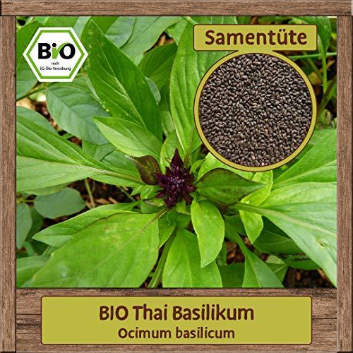 Samenliebe BIO Thai Basilikum Ocimum basilicum Saatgut samenfest in BIO Qualität ÖKO-DE-007 reicht für ca. 2m²