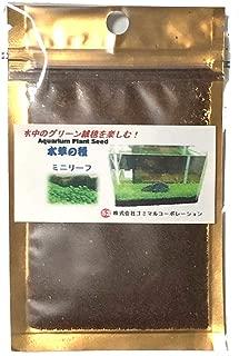 水中のグリーン絨毯 水草の種 ミニリーフ