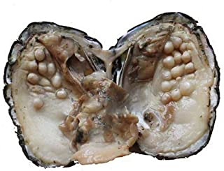 Cultured Freshwater Love Wish Pearl Oyster with Plenty of Pearls Inside (5-7mm) Sold by PC