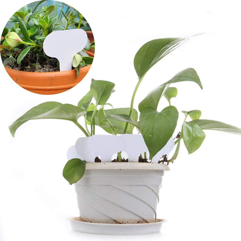 NON 100Pcs Etiquetas de Plantas de Jard/ín Marcadores de Plantas Etiquetas de Vivero para Semillas en Macetas Hierbas Flores Verduras