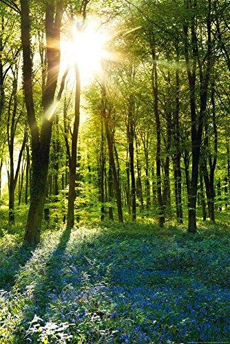 empireposter Forests - Sunrise Bluebell Wood - Poster Foto Landschaft Wälder Plakat Druck - Größe cm