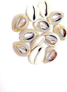 Crispy 12 Pieces Sea Shell Cutted Hair Beads Cowrie Rasta Dreadlocks Braid Decoration Selection (Pack of 1)