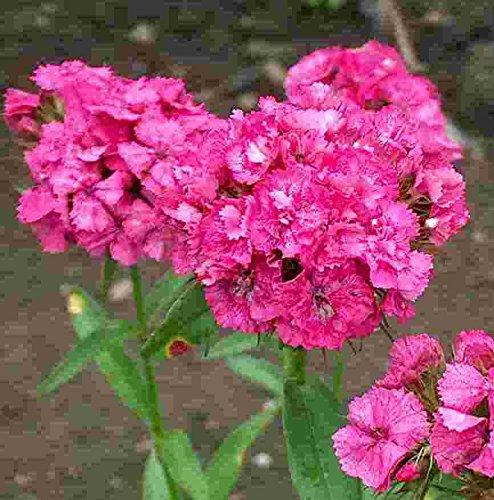 Mühlan Garten Töpfe rot