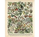 Leinwand Kunstdruck Vintage Adolphe Millot Enzyklopädie