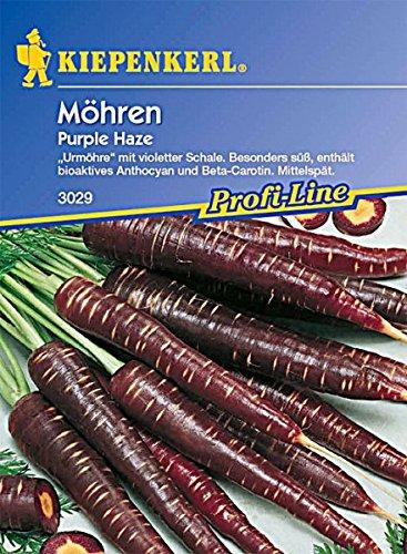 Möhren Purple Haze schwarze Urmöhre