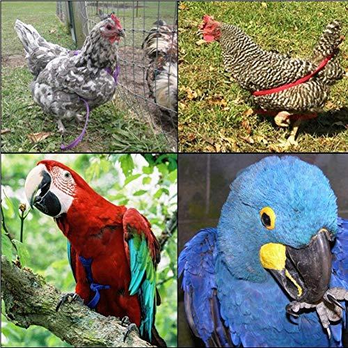 Hualieli Arnés Y Correa para Loro, Correa para Pájaros Ajustable ...