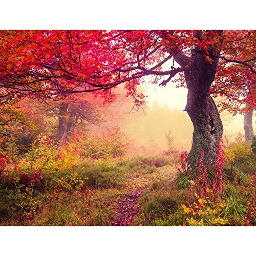 Fototapete Herbst Wald Vlies Wand Tapete Wohnzimmer Schlafzimmer Büro Flur Dekoration Wandbilder XXL Moderne Wanddeko - 100% MADE IN GERMANY - Runa Tapeten 9079010a