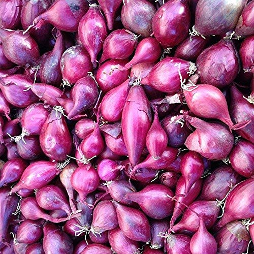 Red Onion Starter Sets - 100 Count Set - for Early Green Table Onions