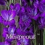sanhoc viola gladiolo bonsai garden bonsai fiori in vaso orchidee viola gladioli gladiolo 20pcs