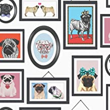 39949085 Pet group concept black and white photo Wallpaper wall mural