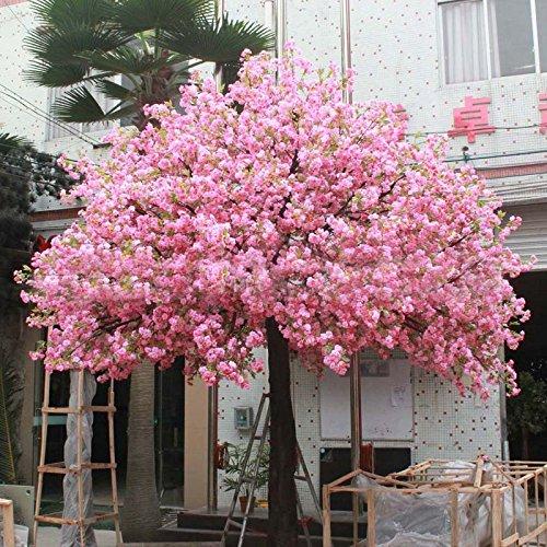 10 PCS rouges fleurs de cerisier japonais Graines Cour Jardin Bonsaï Graines petit arbre Sakura Graines de couleurs mélangées
