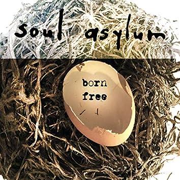 Born Free (Acoustic)