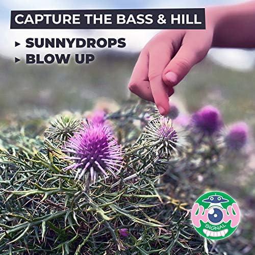 Capture the Bass & Hill