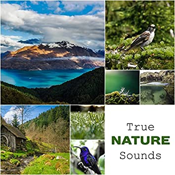 True Nature Sounds: Calm & Relaxing Music, Songs for Stress Relief, Healing Therapy, Soothing Ambient
