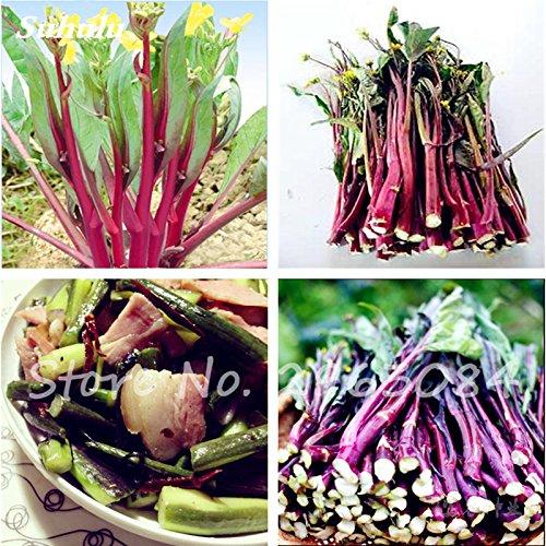Grosses soldes! 100 Pcs semences de légumes biologiques Kale semences non OGM comestibles délicieux pour les plantes ornementales, Bonsai plante pour jardin