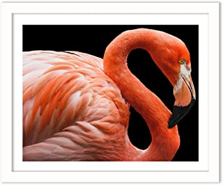 Humble Chic Framed Wall Decor - Fine Art Picture Poster Prints in White Frame for Home Decorations Living Dining Room Bedroom Kitchen Bathroom Office - Flamingo Tropical Bird, 16x20 Horizontal