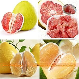 Amazon.es: semillas de pomelo