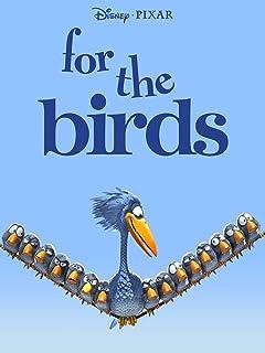 Funny Bird Videos