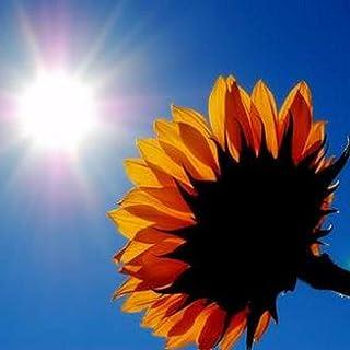 Sunshine comes into my mind
