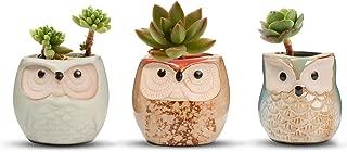 Mejor Macetas Para Cactus Recicladas de 2020 - Mejor valorados y revisados