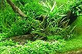 100 Wasserpflanzen