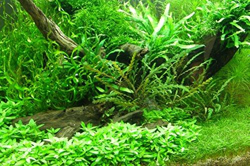 Mühlan - über 120 Aquarium-Pflanzen in 16 Bunde - großes farbiges Sortiment für 200 Liter Aquarium