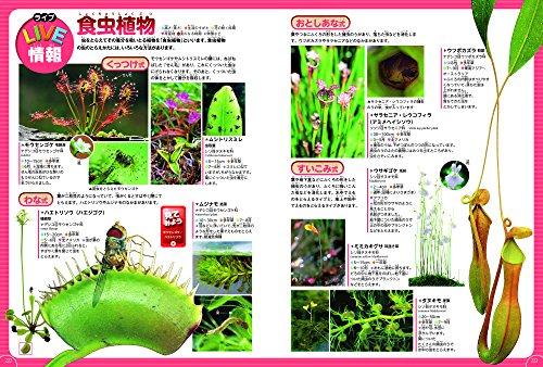 【DVD付】植物 (学研の図鑑LIVE) 3歳~小学生向け 図鑑
