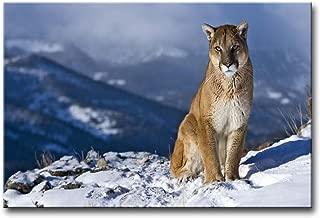 cougar artwork