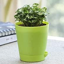 Ugaoo Syngonium Mini Indoor Plant With Pot