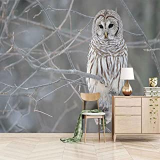 VITICP Adults Kids Wall Stickers Decals Peel and Stick Removable Wallpaper Grey Animal owl for Nursery Bedroom Living Room...