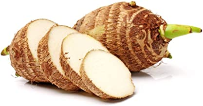 5 Taro Bulbs: Green Elephant Ear Plants. Colocasia Esculenta, Cocoyam Plant, Fast Growing Edible Vegetable. Contains Many Antioxidants and Vitamins Easy to Grow