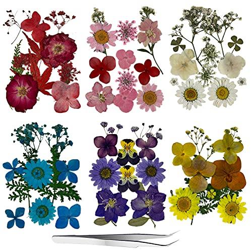 Roqueen 72 Piezas Naturales Flores Prensadas Secas para Resina con Pinzas para Scrapbooking DIY Vela Decoración Joyas Artesanía Tarjetas Haciendo(6 Paquetes)