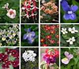 Hanging Basket Summer Collection Plug Plants, 10 Plug Plants *Amazing Value*
