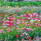 Adolenb Jardin- 500pcs Graines de thym de carthame au sol vivaces résistantes au froid'Fleurs de la mer' de fleurs adaptées aux abeilles Plantes herbacées du jardin