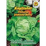 Salade de tête Viktoria (portion)