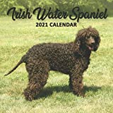 Irish Water Spaniel 2021 Calendar: Perfect for Notes and Planning, Monthly and Weekly