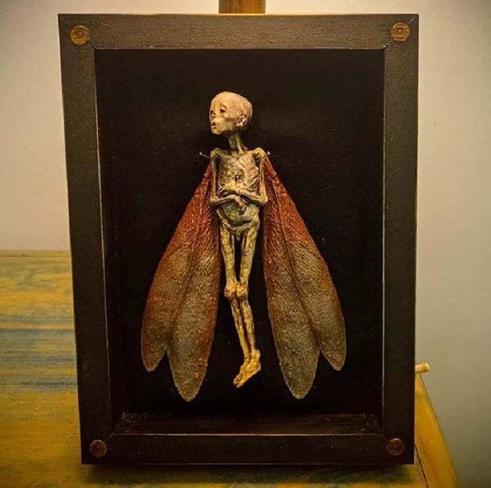LEMOKIKI 1 Limited price 2 3 Pcs Cursed Items Shadow Fairy Box Display - Dead Save money