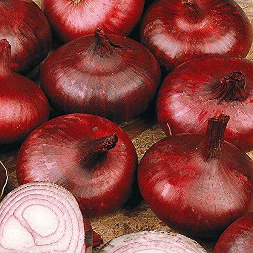 Graines d'oignon - RED BRUNSWICK - Variété doux et très doux - 50 graines