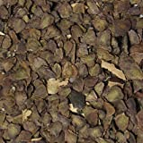 50 Semilla Jacaranda Bonsái Paquete Jacaranda Mimosifolia